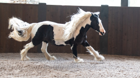 horses-58