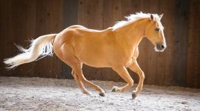 horses-104