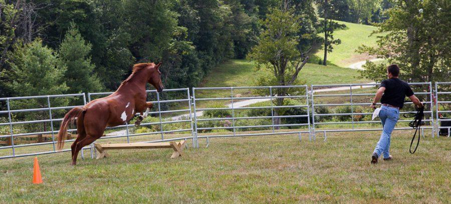 Leo Jumping