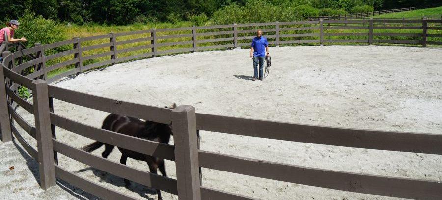 Male Equine Coach