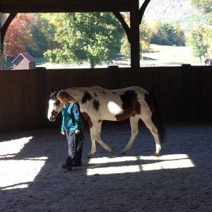 wild courage equine