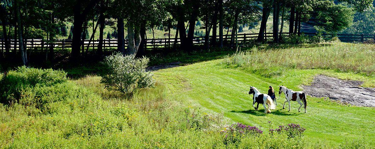 Horse Roundpen